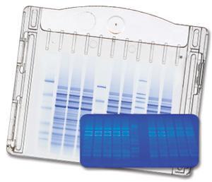 Precast protein gels : 5,40 euros / gel