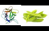 Psophocarpus tetragonolobus (PTL/PTA II)