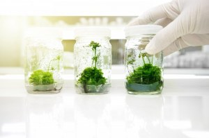 High quality media and vessels for plant culture