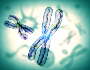 How would you measure the Telomere length ?
