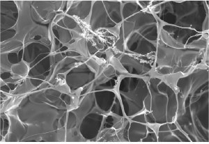 3D culture scaffold for cancer cells